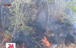Báo động đỏ nguy cơ cháy rừng tại các tỉnh phía Nam