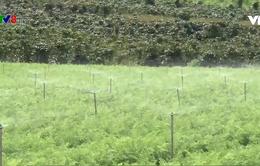 Lợi ích kép trong sản xuất tiết kiệm nước mùa khô