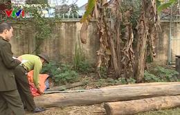 Khó khăn xử lý lâm tặc phá rừng Khe Giáo, Yên Bái