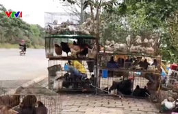 Khó kiểm soát buôn bán động vật hoang dã