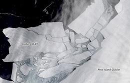 Hai núi băng Nam Cực vừa vỡ, liệu thảm họa gì sẽ xảy ra?