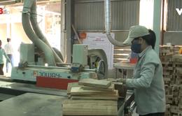 Trồng rừng gỗ lớn ở miền núi Quảng Nam