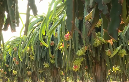 Tiền Giang đề nghị xây kho bảo quản trái cây tồn đọng do ảnh hưởng từ dịch COVID-19