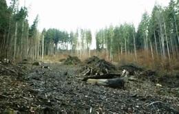 Nỗi lo sợ mafia gỗ ở Romania