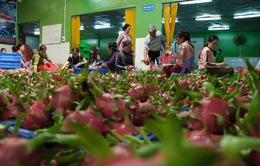 Làm thế nào tháo gỡ khó khăn cho nông sản Việt trước tình hình dịch viêm phổi cấp?