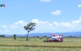 Hiệu quả xây dựng thương hiệu nông sản ở Gia Lai