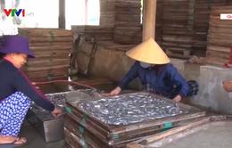 Ngư dân Quảng Trị phấn khởi được mùa cá cơm đầu năm