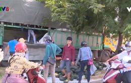 Phú Yên: Nhiều hình thức giúp nông dân tiêu thụ dưa hấu