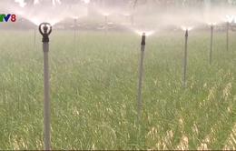 Gia tăng giá trị nông sản tại Lý Sơn