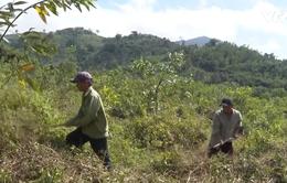 Nguy cơ cháy rừng cấp cực kỳ nguy hiểm tại Khánh Hòa