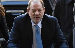 """""""Ông trùm Hollywood"""" Harvey Weinstein lãnh 23 năm tù với tội danh hiếp dâm"""