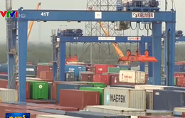Container tồn đọng tại các cảng biển giảm 65%