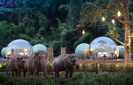 Khám phá cuộc sống những chú voi từ ngôi nhà bong bóng