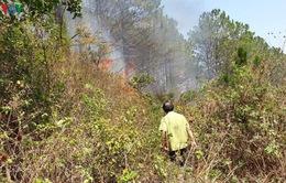 Cháy rừng thông phòng hộ núi Hàm Rồng - Gia Lai