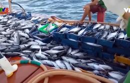 Bình Định: Ngư dân nỗ lực vươn khơi