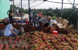 Đề nghị Trung Quốc mở cửa cho nhiều loại nông sản Việt
