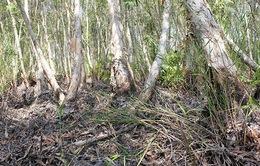 Tăng cảnh báo cháy cấp cao nhất ở rừng tràm Cà Mau