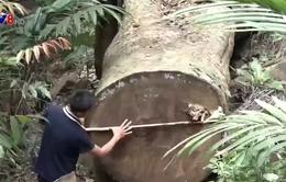 Gia Lai làm rõ vụ phá rừng Kông Chro