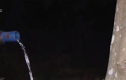 Đồng Nai: Người dân trắng đêm tìm nước tưới cây