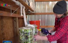 Nông dân Mỹ thay đổi cách bán hàng trong mùa dịch COVID-19