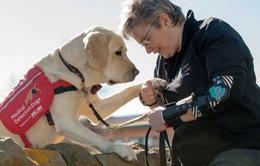 Dự án huấn luyện chó đánh hơi người nhiễm COVID-19