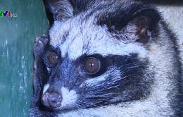 Nỗ lực của Việt Nam bảo vệ động vật hoang dã