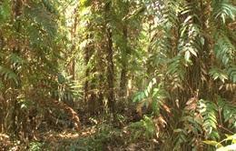 Cà Mau cảnh báo cháy rừng cấp cực kỳ nguy hiểm