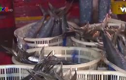 Thừa Thiên - Huế được mùa thủy hải sản