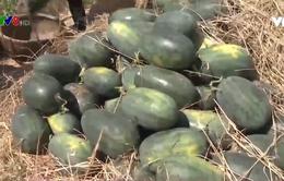 Quảng Nam rà soát nông sản xuất khẩu
