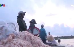 Ngư dân Trung Trung Bộ trúng mùa ruốc, sứa biển