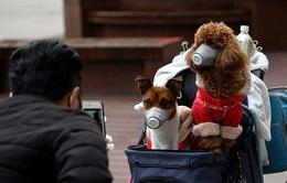 Hong Kong (Trung Quốc) xác nhận chó nhiễm SARS-CoV-2