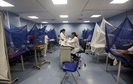 Cảnh báo nguy cơ lây lan dịch sốt xuất huyết tại Mỹ Latin