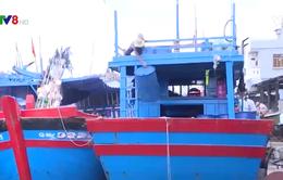 Quảng Ngãi chỉ 8% tàu cá gắn thiết bị giám sát hành trình