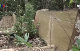 Ngổn ngang gỗ lậu tại rừng phòng hộ Kông chro