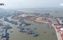 Bình Định: 5 tàu cá đóng theo NĐ67 mua được bảo hiểm