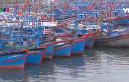 Đà Nẵng: 541 tàu cá đủ điều kiện hưởng bảo hiểm theo nghị định 67