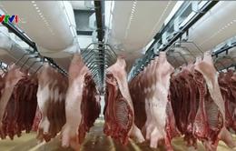 Thủ tướng yêu cầu giảm giá thịt lợn