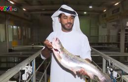 Độc đáo mô hình nuôi cá hồi trên sa mạc ở UAE
