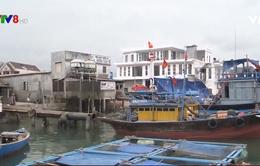 Quảng Nam: Nhiều vướng mắc trong dự án cảng cá Tam Quang