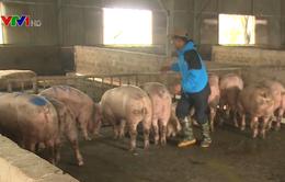 Thịt lợn tiêu thụ chậm do giá luôn ở mức cao