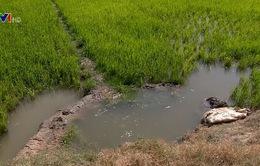 Trữ nước ngọt ứng phó xâm nhập mặn