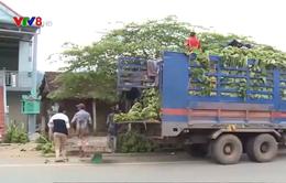 Khó khăn trong tiêu thụ nông sản vùng cao
