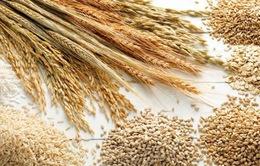 Giá lương thực thế giới giảm mạnh 3 tháng liên tiếp