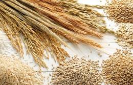 Brazil dự kiến đạt sản lượng ngũ cốc kỷ lục