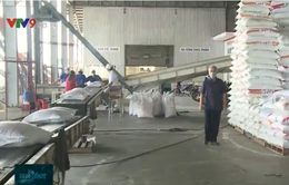 Tác động tích cực từ chủ trương xuất khẩu gạo trở lại