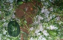 Lai Châu thiệt hại lớn do mưa đá