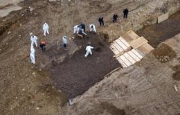 New York gấp rút đào hố tập thể chôn bệnh nhân COVID-19 là thông tin không chính xác