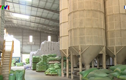 Thủ tướng đồng ý cho xuất 400.000 tấn gạo trong tháng 4