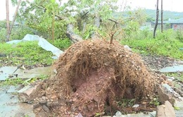 Mưa đá kèm theo gió lốc gây thiệt hại nặng ở Mộc Châu (Sơn La)