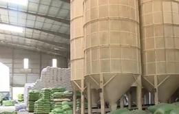 Có hay không việc một số doanh nghiệp từ chối hợp đồng gạo dự trữ quốc gia chuyển sang xuất khẩu?